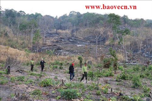 Bảo vệ phát hiện phát hiện phá rừng