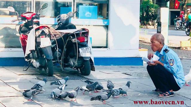 Hình ảnh chú bảo vệ cho chim bồ câu ăn làm dân cư mạng xúc động